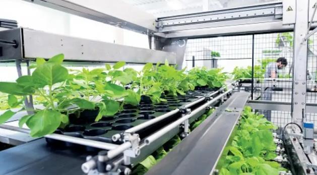 Vacuna vegetal: 600 cordobeses ya se sumaron a la investigación